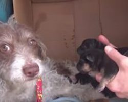 Stray Dog Is So Happy To Show Rescuers Her Babies
