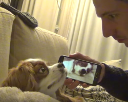 Snoring dog's about to get a taste of his own medicine