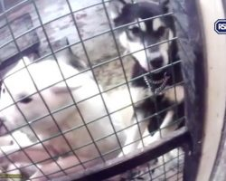 "Veterinarian And Assistant Who Kept Huskies In Filthy Secret ""Dungeon"" Convicted Of Animal Cruelty"