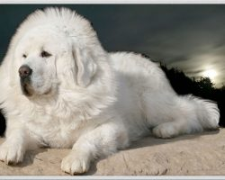 25 Most Expensive Dogs Money Can Buy