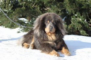 aigrette_velikiy_tsaluma_say_strazce_z_tibetu_x_legenda_tibeta_vlastelin_kolets
