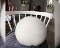 It Looks Like A Giant, Fluffy Cotton Ball – But Watch When She Starts To Move…