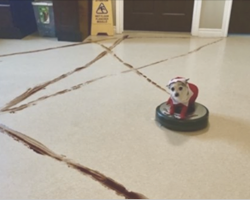 This is what happens when a roomba meets a pile of dog poop at 1:30 a.m.