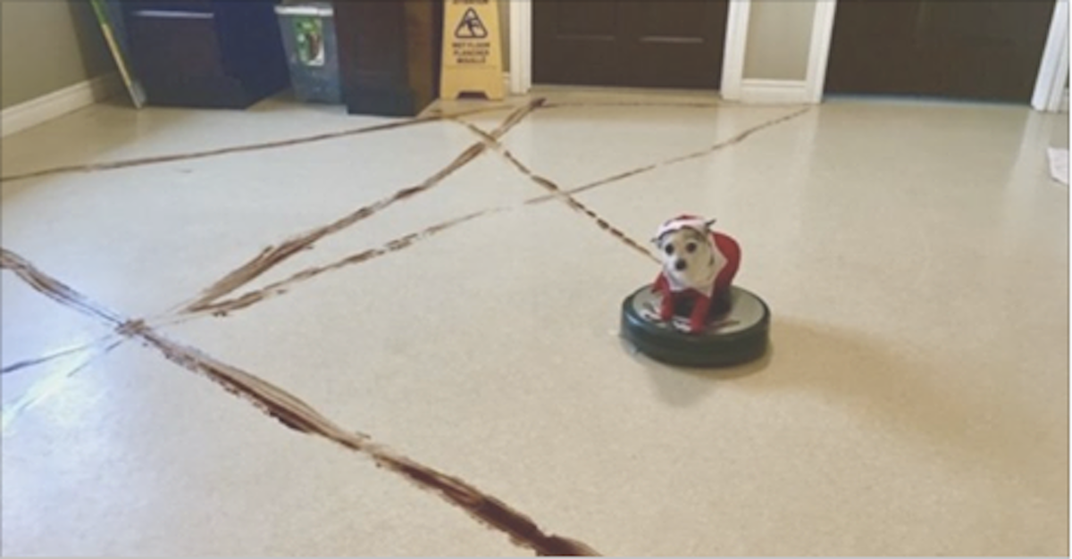 how to clean roomba after dog poop