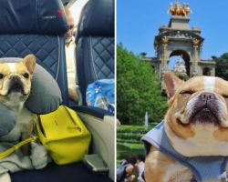 This Adorable Frenchie's European Vacation Is Making Us Extremely Jealous