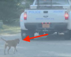 Police are surprised to see a dog following them—when they stop, she jumps in the vehicle
