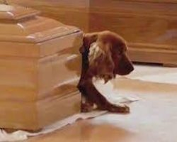 Devoted Cocker Spaniel Paws At Casket Of Owner Who Died In Italy Earthquake