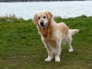 dog-103058_960_720