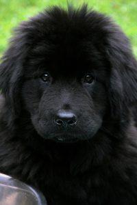 dog-1062335_1280