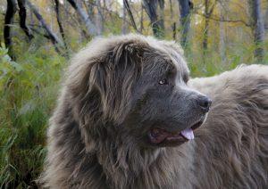 dog-1840127_1280