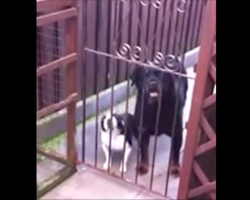 """Dad Says """"Hello"""" To His Pup. Family Can't Stop Laughing At Dog's Response"""