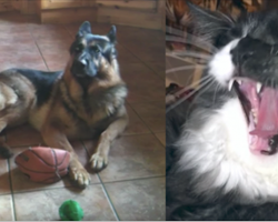 These talking dogs and cats discuss playing fetch will have you in stitches