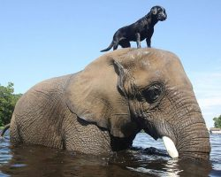 Adorable Friendship Between Elephant and Dog Who Love Playing in the Water