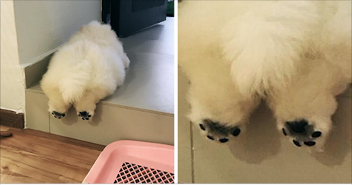 This Potato Is Taking Instagram By Storm And Its Photos Are Just - This instagram chow chow looks like a fluffy potato and its so cute it doesnt even look real