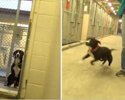 Sad shelter dog literally jumps for joy after realizing he's been adopted