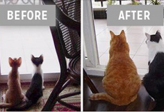 10+ precious before and after pics of animals who grew up together