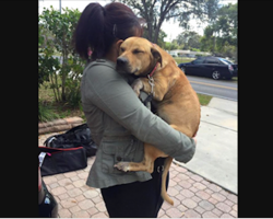Scared dog rescued from a field — 3 days later, she's still clinging to rescuers
