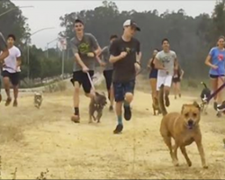 High school cross country team invites shelter dogs to run with them on their morning runs