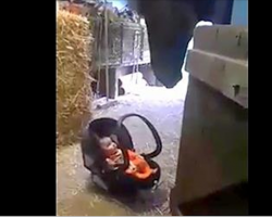 Mom Sets Her Tiny Baby Down, Horse Quickly Springs Into Action
