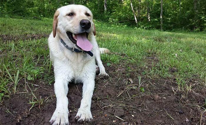 man-finds-dog-id-tag-dew-adventures-6