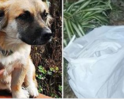 Frantic Dog Won't Leave Plastic Bag Alone, Then Neighbor Realizes Something Is Terribly Wrong