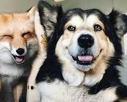 Sweet Rescue Dog Wins The Heart Of Fox