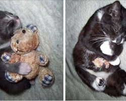 10+ Before-And-After Photos Of Pets Growing Up With Their Toys