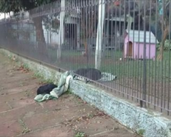 Rescued Puppy Pulls Her Blanket Outside To Share It With Stray Dog