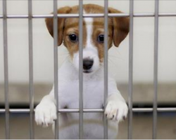 San Francisco recently passed law for pet stores – pet stores can only sell rescue animals