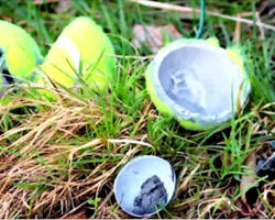 Be on the lookout for tennis ball bombs… this is just sickening