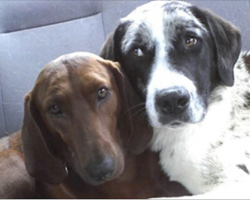 Shelter Dog Refuses To Be Adopted Unless Her Best Friend Can Come Too
