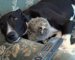 These Unexpected Animal Friendships Prove Love Has No Boundaries!