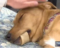 Vets Warn Dog Owners Of The Dangers Of Marrow Bones