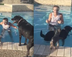 Yorkie's Perfectly Timed Jump Into The Pool Has Whole Family Laughing