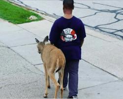 10-year-old boy walks blind deer across the street to find food everyday before school