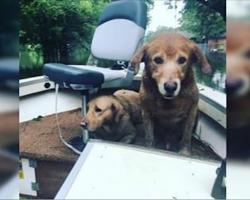 Man Spots 2 Golden Retrievers In Boat Left Behind In Flood, Posts Heartbreaking Message Online