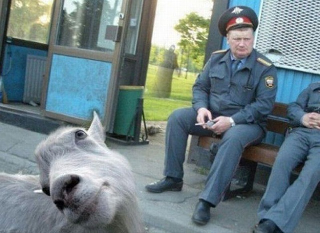 The Funniest Animal Photobombs Of All Time - The 39 funniest animal photobombs of all time