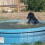 Black Labrador caught having way too much fun in the pool