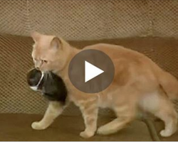 Cat Finds An Orphaned Baby Rabbit. Even Mom Is Shocked By What She Does With It…