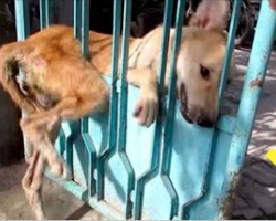 Stray Dog Got Stuck In Gate And Nobody Wanted To Help – Now Watch When They Show Up