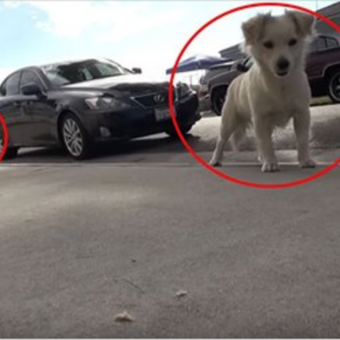 A Must Watch: Two Abandoned Inseparable Dogs Reveal The True Meaning Of Friendship..Oh MY!!