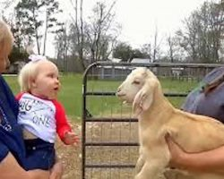 Baby And Goat Have A Hilariously Adorable Conversation Together