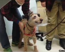 Blind Rescue Dog Gets His Eyesight Back In Tearjerking Video