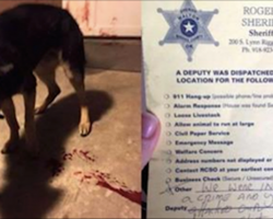 Family Comes Home From Church, Finds Dog Bleeding Out On The Porch Along With A Note