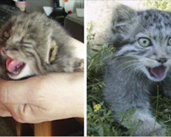 Farmer thought he found kittens. Grow up and turn out to be something entirely different
