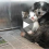 Homeless Dog Nurses An Abandoned Kitten. This Will Definitely Melt Your Heart (With UPDATE)