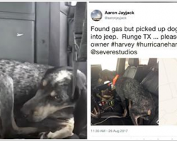 Scared Dog Keeps Following Man During Hurricane Harvey, So He Posts Message Online For Owners