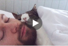 Man adopts unwanted shelter cat, and their bedtime routine is heart-melting