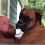 "Man asks his dog, ""Are you a dog or a baby?"" Dog's response will make you laugh out loud"