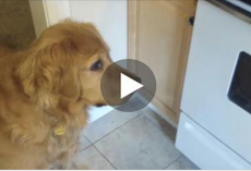 This picky dog won't eat her dry food, so dad came up with a solution…